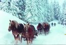 Plimbari cu sania trasa de cai